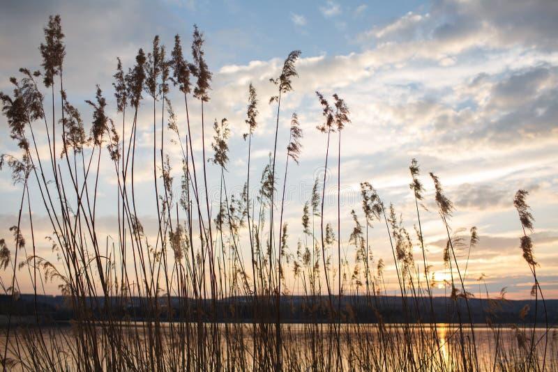 Herbe sèche près de lac au-dessus de fond de coucher du soleil et de ciel images stock
