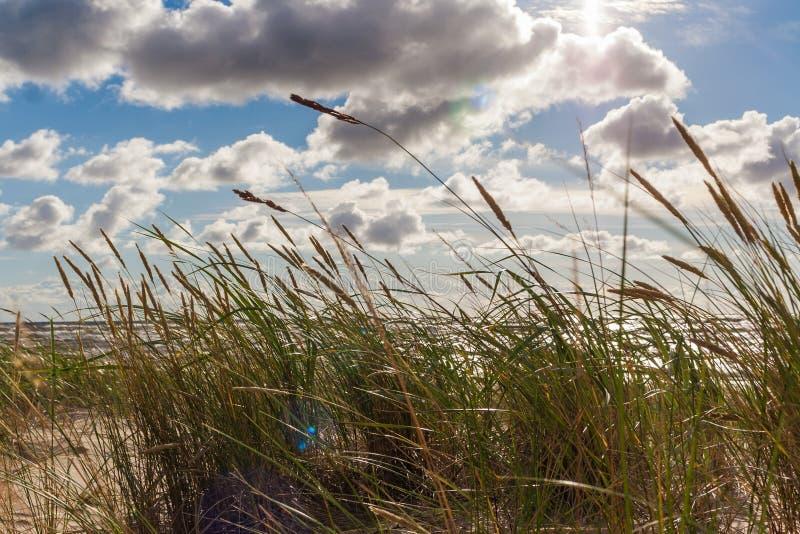 Herbe s'élevant en sables photographie stock libre de droits