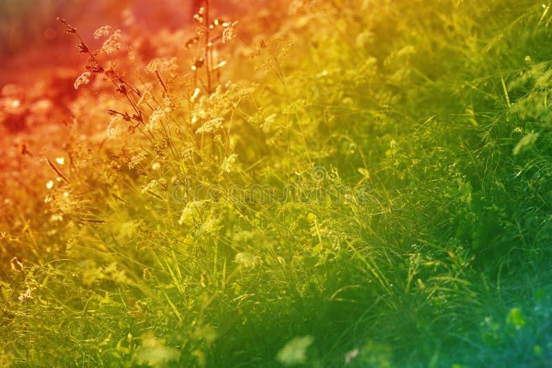 Herbe sauvage photos stock