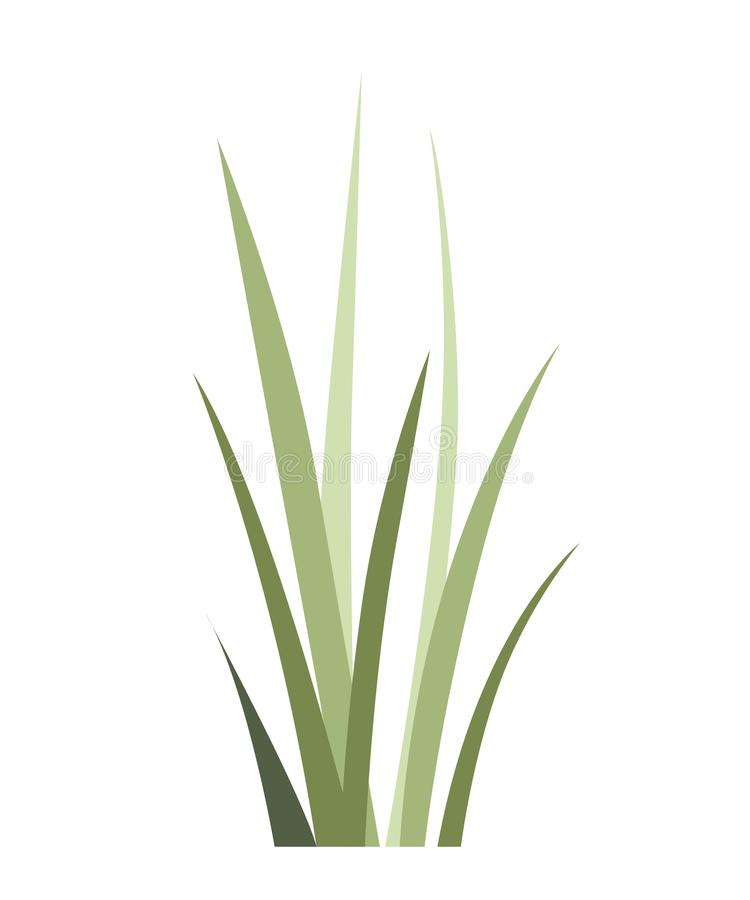 Herbe sauvage verte Usine de champ Icône d'herbe d'été Illustration plate de vecteur d'isolement sur le fond blanc illustration libre de droits