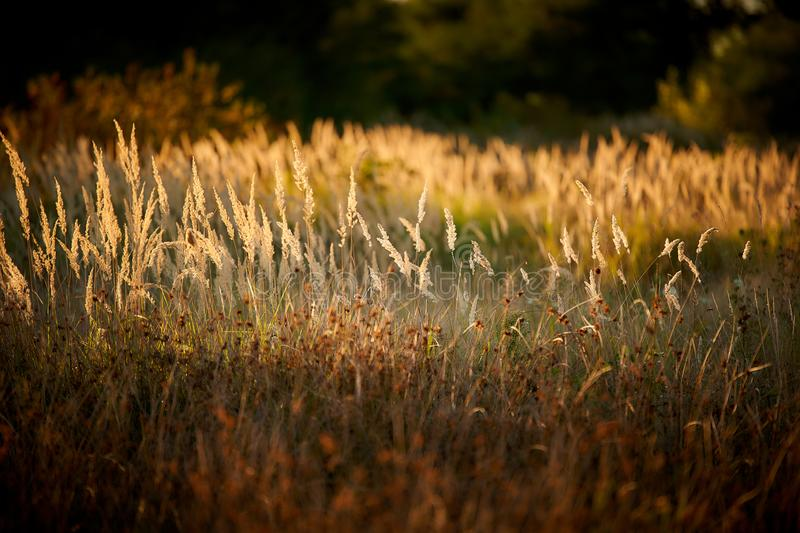 Herbe Steppe au soleil couchant images stock