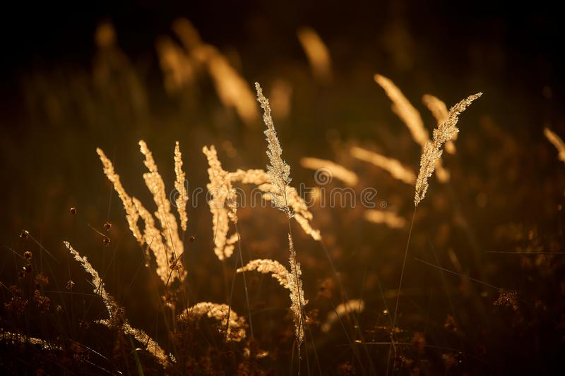 Herbe Steppe au soleil couchant photo stock