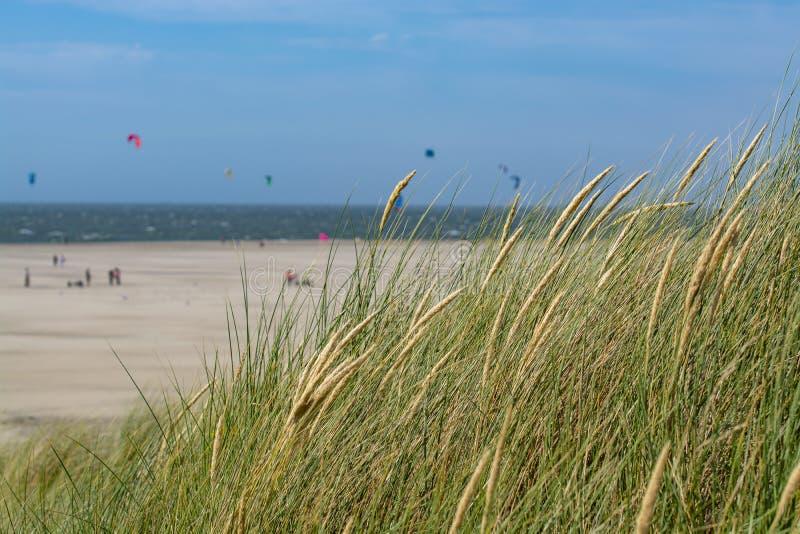 Herbe sur des dunes de sable sur la Mer du Nord près de Renesse, Zélande, Pays-Bas images stock