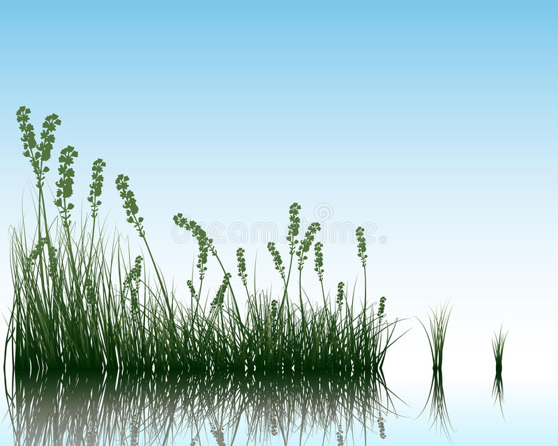 Herbe sur l'eau illustration de vecteur