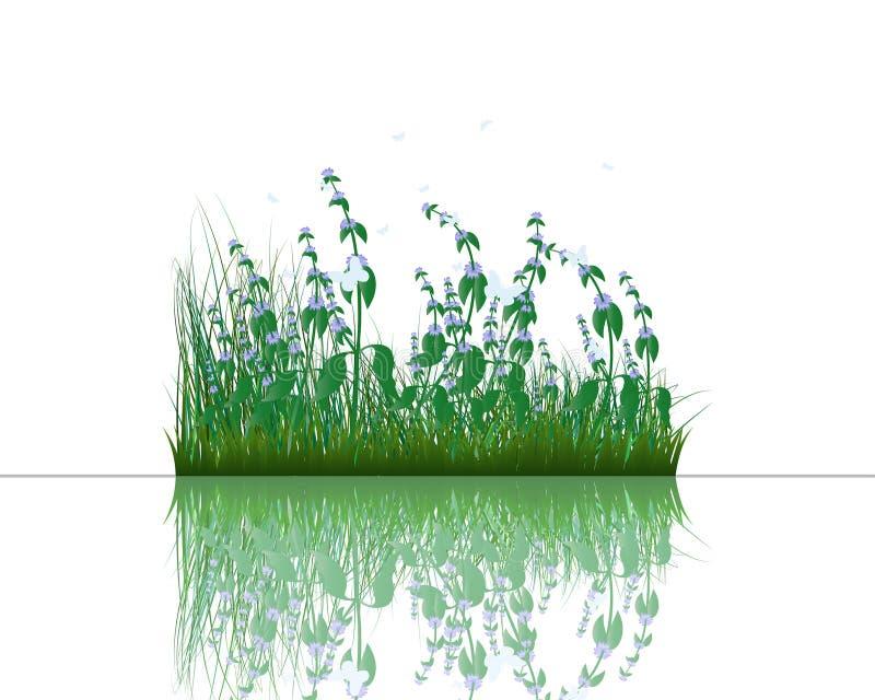 Herbe sur l'eau illustration libre de droits