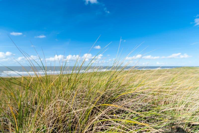 Herbe sur la dune de sable avec l'océan derrière images libres de droits
