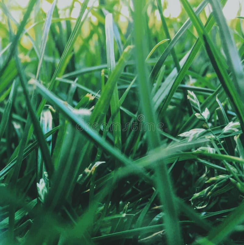 herbe sur la pelouse d'arrière-cour - maison, maison et concept de jardinage image libre de droits