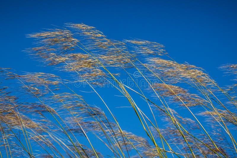 Herbe sur le fond de ciel bleu photos libres de droits