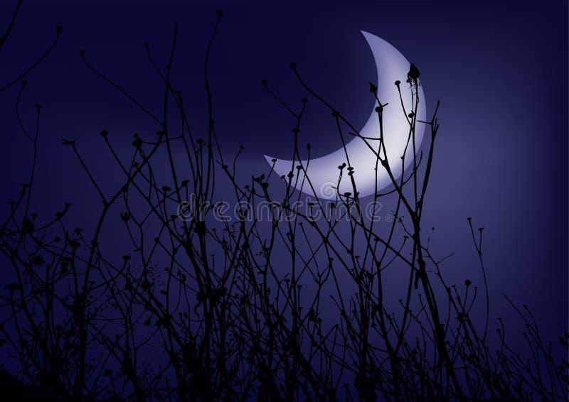 Herbe sur un ciel nocturne de fond illustration libre de droits