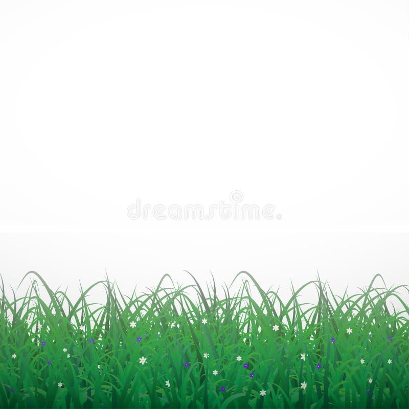Herbe sur un fond brillant blanc avec des fleurs illustration de vecteur