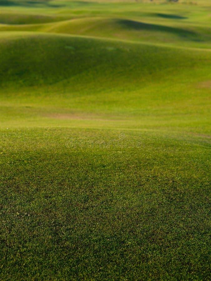 Herbe, terrain de golf vert de fond. images libres de droits