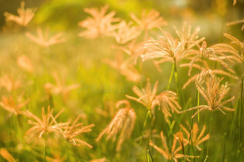 Herbe, travail de beauté le soir photographie stock