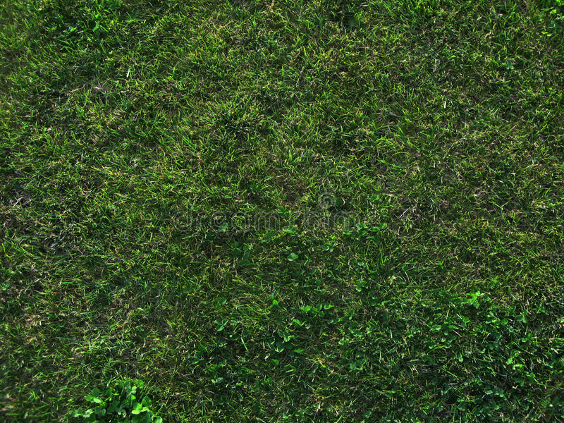 Herbe vert-foncé photo libre de droits