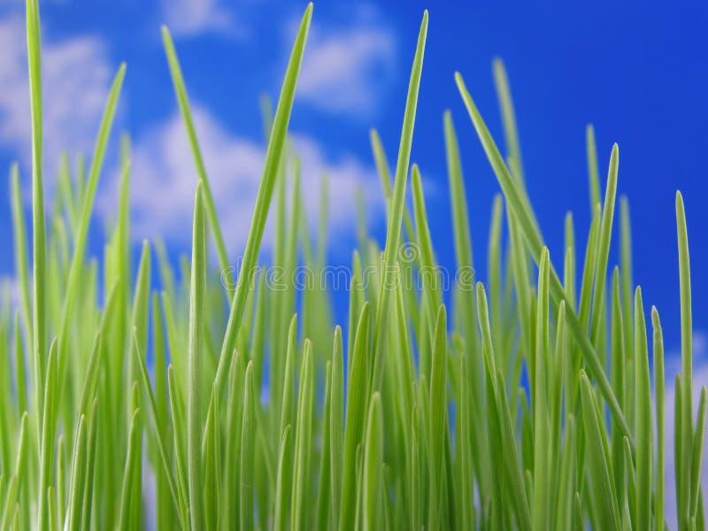 Download Herbe verte image stock. Image du jardin, saison, organique - 2140477