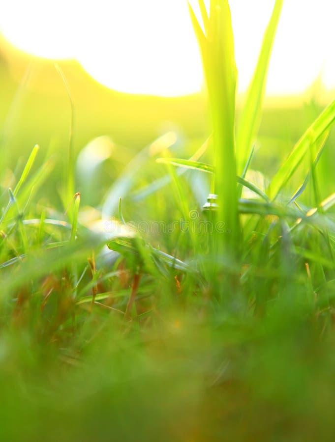 Herbe verte images stock