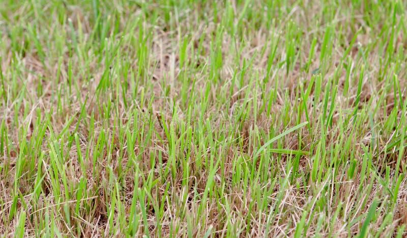 Download Herbe verte photo stock. Image du outdoors, jour, extérieur - 45354446