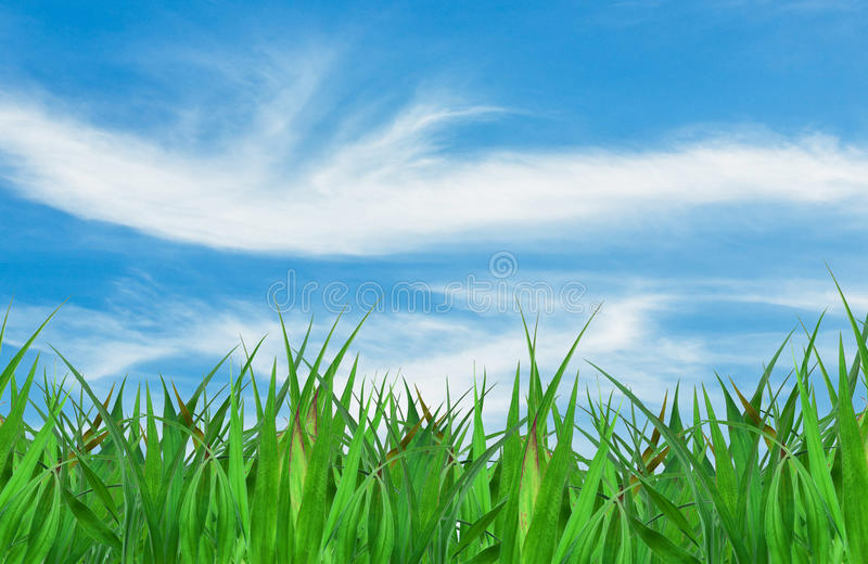 Herbe verte au-dessus d'un fond de ciel bleu photos libres de droits