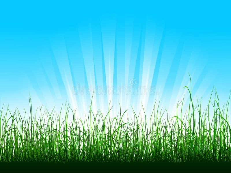 Herbe verte au-dessus de ciel bleu illustration libre de droits