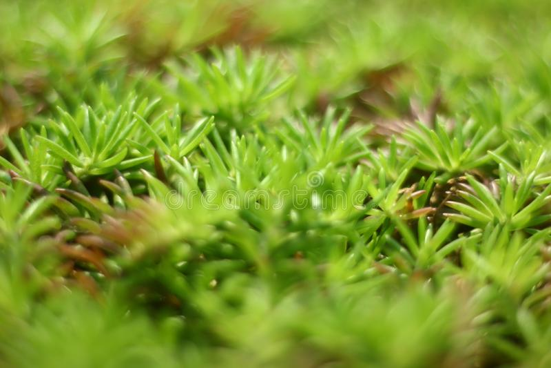 Herbe verte avec Bokeh crémeux photo stock