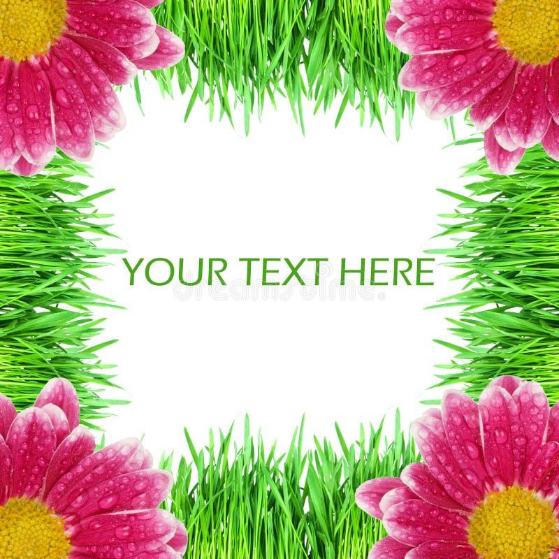 Herbe verte avec des couleurs roses photos stock