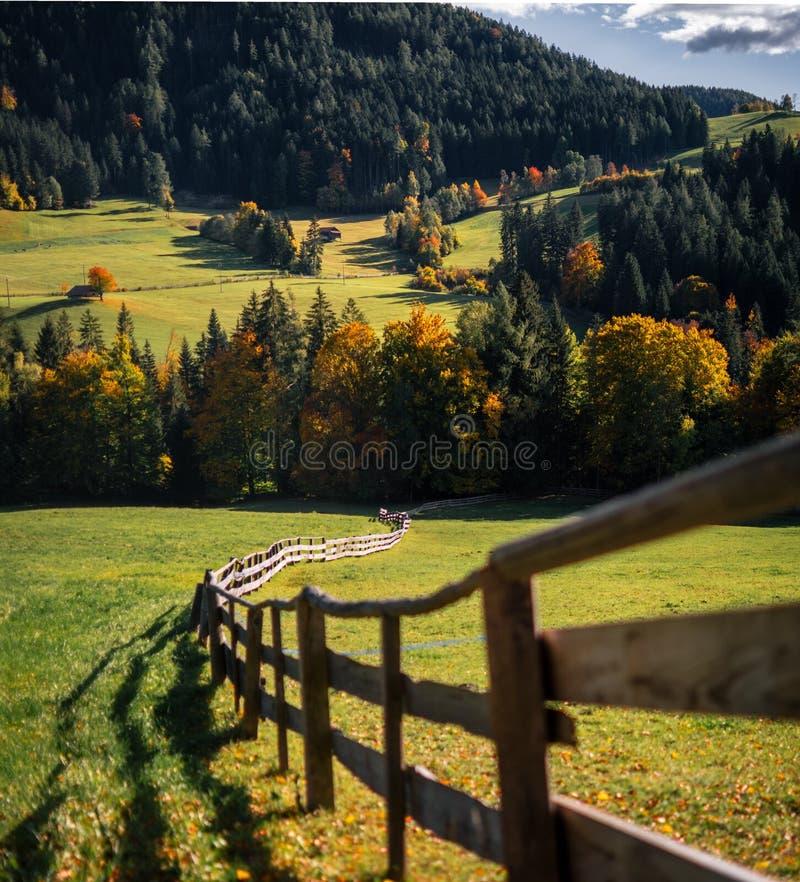 Herbe verte avec la barrière en bois dans les Alpes image stock