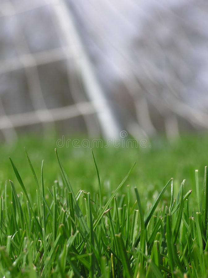 Download Herbe Verte Avec Le Réseau Du Football Photo stock - Image du vert, noeud: 737550