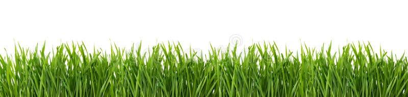 Herbe verte d'isolement sur le fond blanc image libre de droits