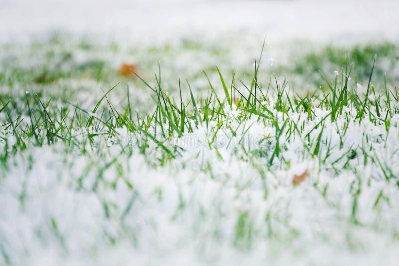Herbe verte dans la neige, bonjour ressort, au revoir concept d'hiver images libres de droits