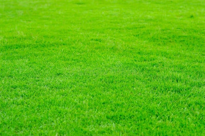 Herbe verte dans le golf classée photos libres de droits