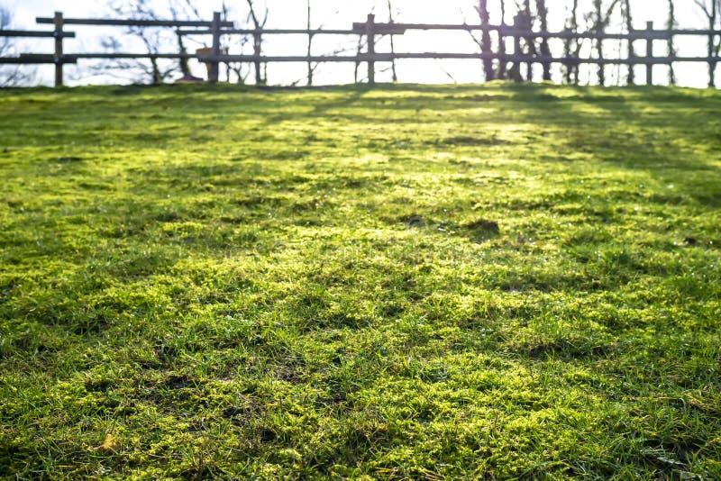 Herbe verte dans le pré dans les rayons du soleil de matin dans l'arrière-cour, sur un fond brouillé la barrière image libre de droits