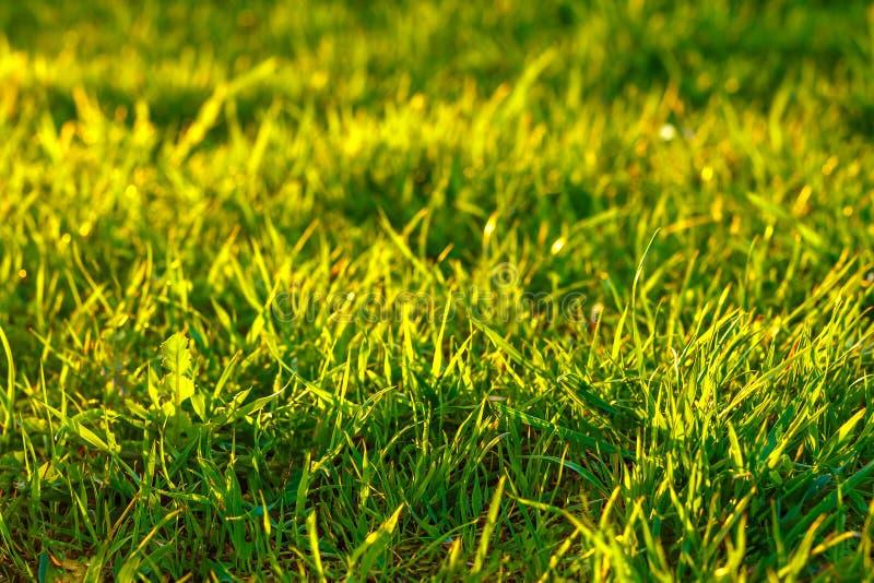Herbe verte dans les rayons du coucher du soleil, un beau fond sur le circuit économiseur d'écran photo libre de droits