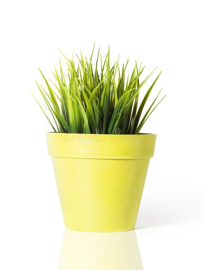 herbe verte dans un pot de fleur jaune d 39 isolement sur le fond blanc photo stock image du. Black Bedroom Furniture Sets. Home Design Ideas