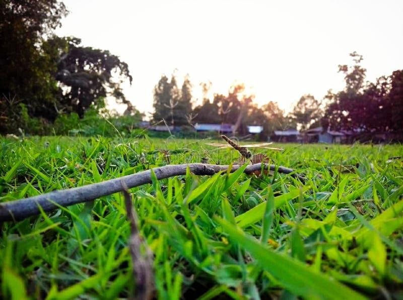 Herbe verte de jardin et lumière du soleil photo stock