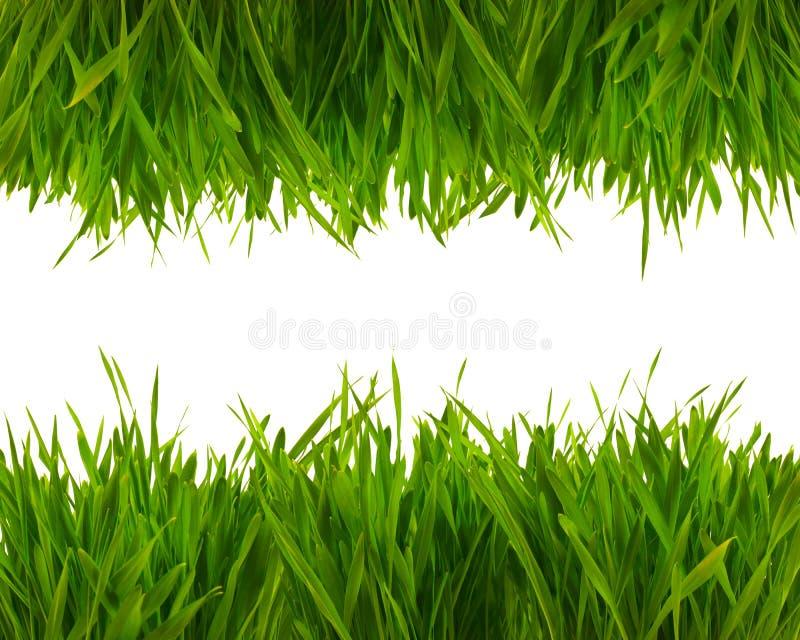 Herbe verte de ressort frais photo stock