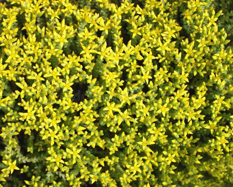 Herbe verte de source avec des fleurs images stock