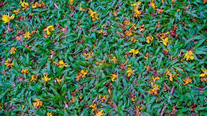 Herbe verte de vue sup?rieure et fleur jaune s?ches photos libres de droits