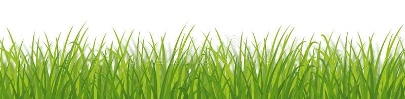 Herbe verte dense illustration libre de droits