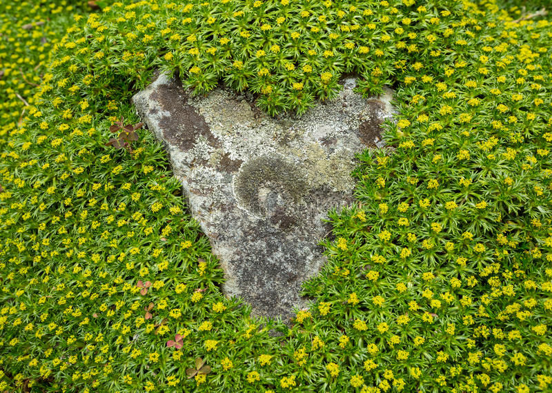 Herbe verte encadrant une roche photos libres de droits