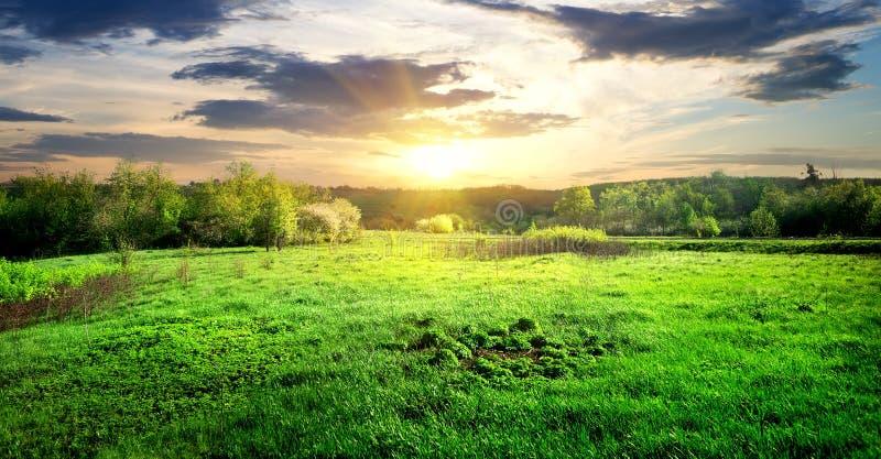 Herbe verte et arbres photographie stock