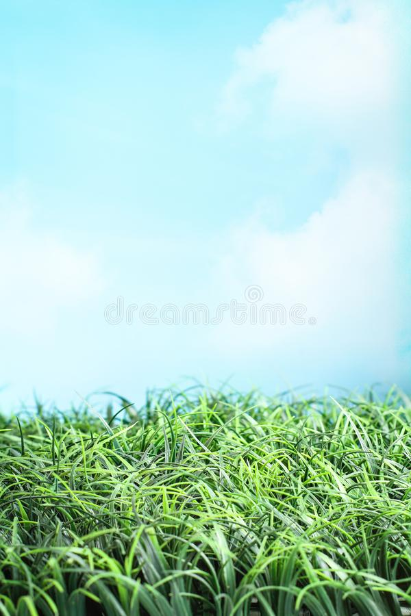Herbe verte et beau ciel bleu photo stock