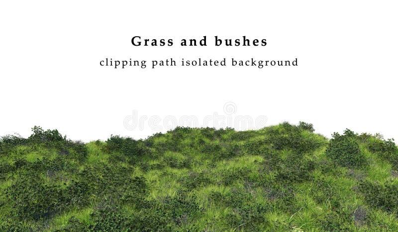Herbe verte et buissons photos stock