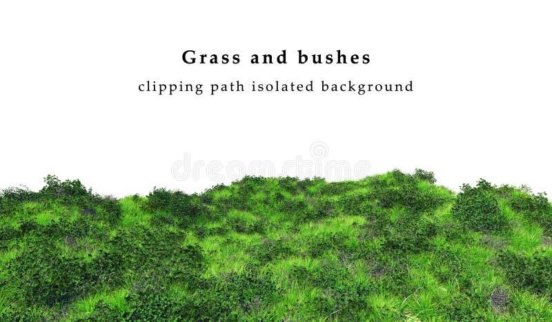 Herbe verte et buissons d'isolement sur le fond blanc image stock