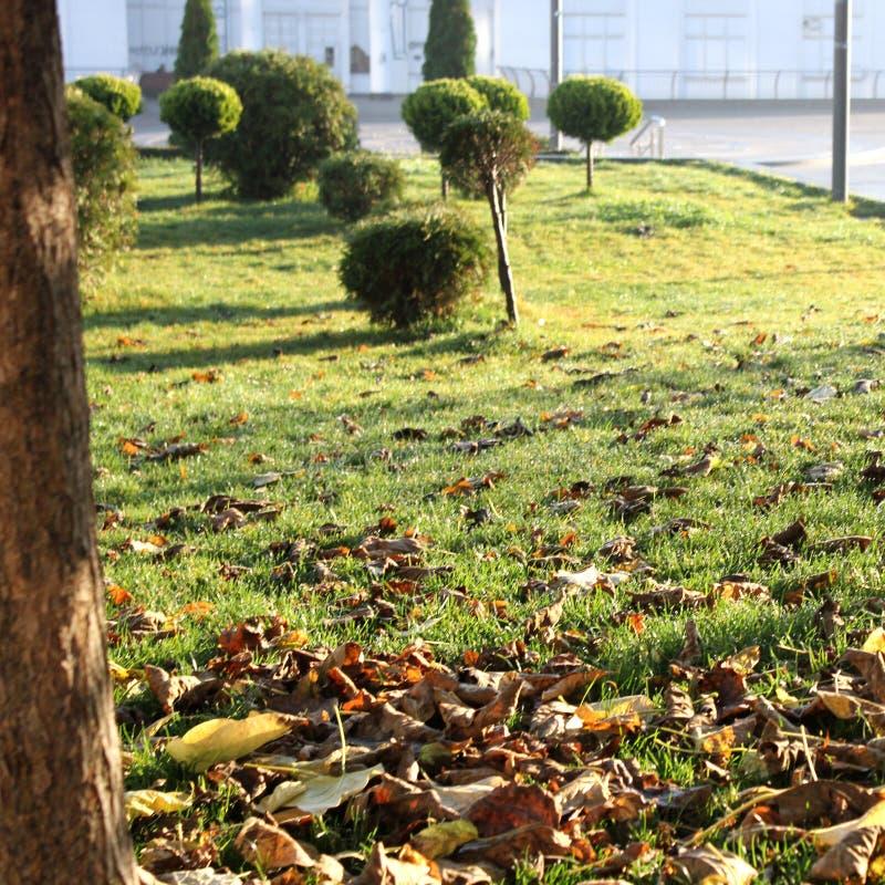 Herbe verte et buissons images stock