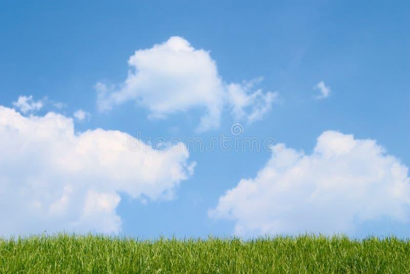 Herbe verte et ciel bleu nuageux images stock