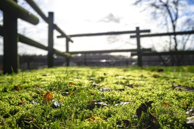 Herbe verte et mousse avec les feuilles tombées sèches dans le soleil de matin dans l'arrière-cour, sur un fond brouillé de la ba images libres de droits