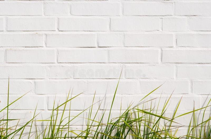 Herbe verte et mur de briques photo libre de droits