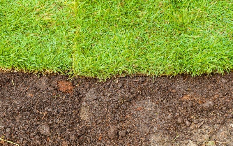 Herbe verte et paysage brun de sol photo libre de droits