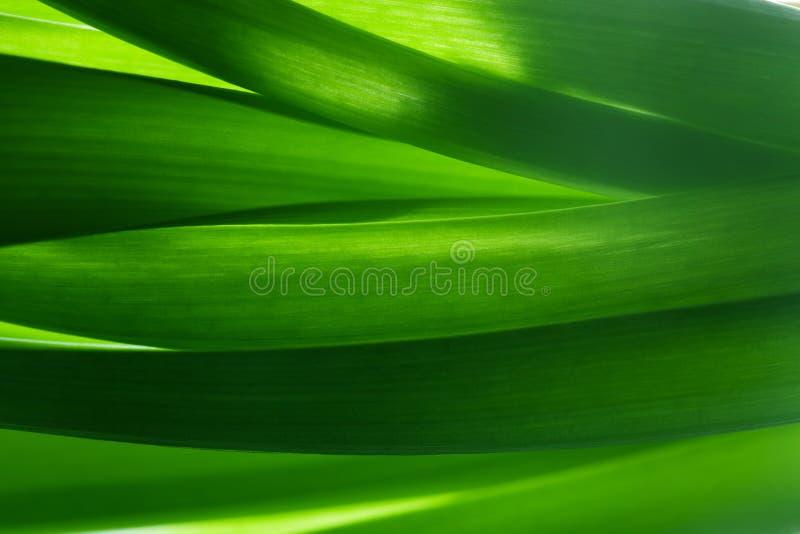 Herbe verte, fond d'usines dans le contre-jour photo libre de droits
