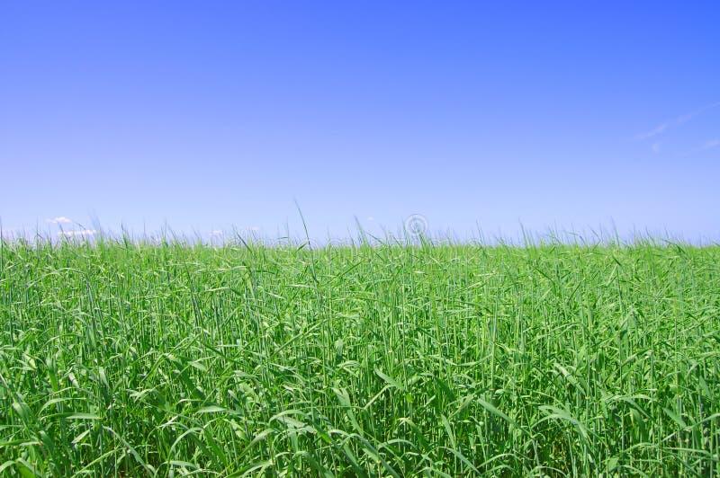 Herbe verte, le ciel bleu et nuages blancs photographie stock libre de droits