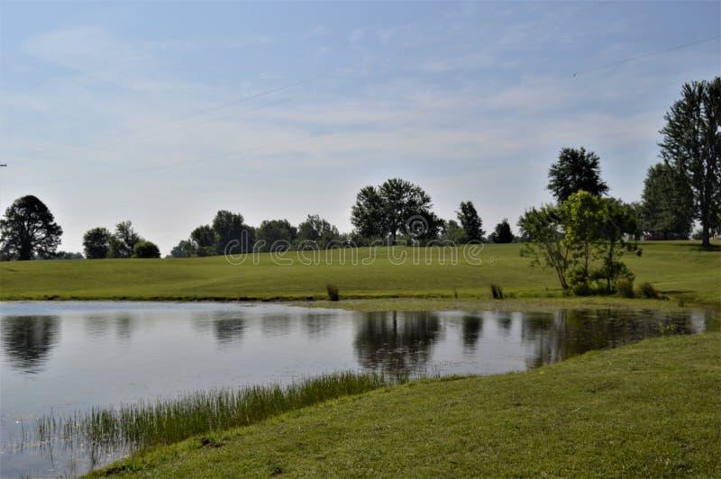 Herbe verte luxuriante s'élevant au bord d'une eau superficielle près des arbres photo libre de droits